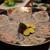 匠 - 料理写真:てっさ:宮崎日向灘産とらふぐ
