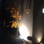 鳥さわ - 看板は出ておらず この照明と紅葉が目印 ミニマルな演出です
