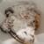 パン・オ・トラディショネル - 料理写真:クロワッサンザマンド