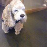 12190945 - 一階に居る看板犬♪かわいい・・・・・たまらん!!!!!