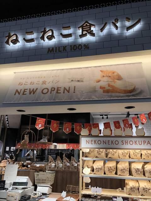 ねこねこ 食パン 大阪