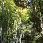 無雙庵 枇杷 - 裏山の竹林