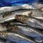 神田魚市場 つかさ丸 直売所 - 朝獲れ旬魚