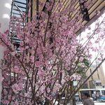 すし処 きみ - 外には大きな桜がお見事。