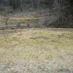 山はげ - 目の前の庭に穴を掘るのは猪だそうです