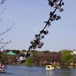 みのりCafe - 桜越しの不忍池