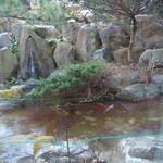 レストラン&喫茶 みのり - その他写真:池にはお魚が泳いでる