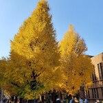 東京大学 中央食堂 - その他写真:きれいです