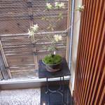 滝乃家 - 2012年3月 ヒカゲツツジ。貴重な植物の一つとされています。