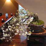 滝乃家 - 2012年4月 ゆすら梅。今年も咲きました!!