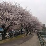 12442073 - お店の前が桜道となっています。