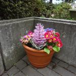 ベンガル - テラスの鉢植え