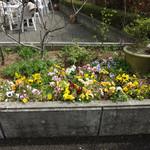 ベンガル - テラスの花壇