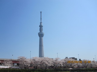 船清 - スカイツリーと桜