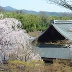篩月 - 2012年4月 桜の季節も「天龍寺」