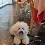 オーシャンパシフィックカフェ - イメージ・カラーはピンク〜♬