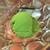 串揚げ 咲くら - 料理写真:抹茶アイスクリーム