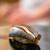 日本橋蛎殻町 すぎた - 料理写真:2020.2 小鰭