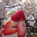 12485335 - 2012/4 4月限定・桜フレーズ