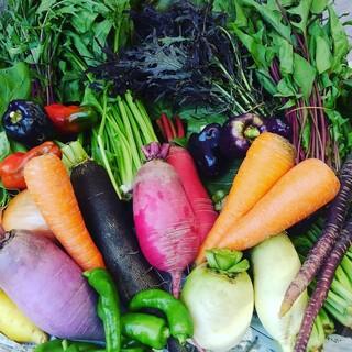 みずみずしい鎌倉野菜を使用。野菜の美味しさを実感できます
