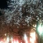 12506090 - 夜桜〜その3〜