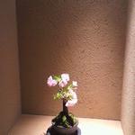 うえと - 季節のお花