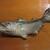 魚虎 - その他写真:カウンター席には、唐津焼(小杉窯)の箸置き