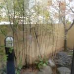 おがた家 - 店内から見た小庭園?