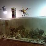 グッドウッドテラス - 水槽、上に乗っているのはフェニックスの紙細工