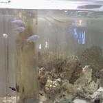 グッドウッドテラス - 魚たち