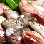 とんがり村 - 魚集合