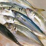 海鮮丼専門店 伊助 - 2020年2月19日、鯵フライを作ろうと思ったら鯵に紛れて鯖が! 毎日、思わぬ出会いがあるものですねぇ。伊助の鯵フライ。とってもサクサクっふわふわ~です。ぜひ食べに来てください!