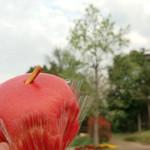 吉備SA(上り) モスカート・ビアンコ - りんごのパン