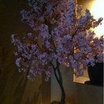 壷中の天地 - 桜でお出迎え