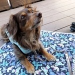 テスタロッサ - 愛犬とテラスランチを楽しみました♪