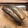 鮨 来多老 - 料理写真:小鰭