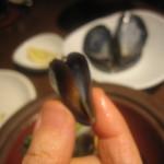 タイーム - ムール貝の赤ちゃん?