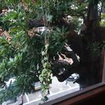レ・グラン・ザルブル - カフェの窓からの景色