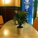 コーヒー ガーデン -
