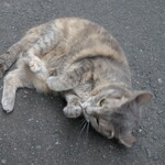 126608214 - .....近所の猫ちゃん.....