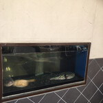 和料理 八車 - 入口横の水槽