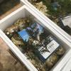 おわせ魚食堂 - 料理写真:渡利牡蠣♪