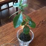 すずの木カフェ - 机の上の植木