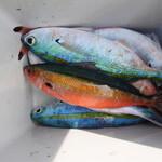 一郎屋 - ※持込食材 釣りツアーで釣ったグルクン達
