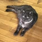 ねこや食堂 - 16歳の雄猫ソラ(なんだバカヤロー 荒井注)