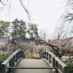 たわらや - 北野天満宮の梅(2020.3.7)