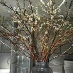 127696572 - 桜と雪柳