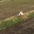 ふたばカフェ - その他写真:裏の畑にヤギがいる