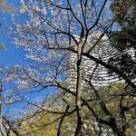 128088054 - 桜とガーデンタワー