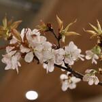 べべのおそうざい - 花見自粛の時期なので店内に桜を用意してます